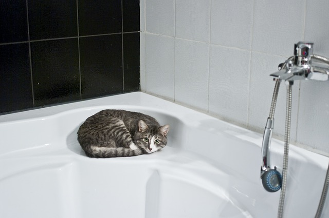 cat-1052060_640