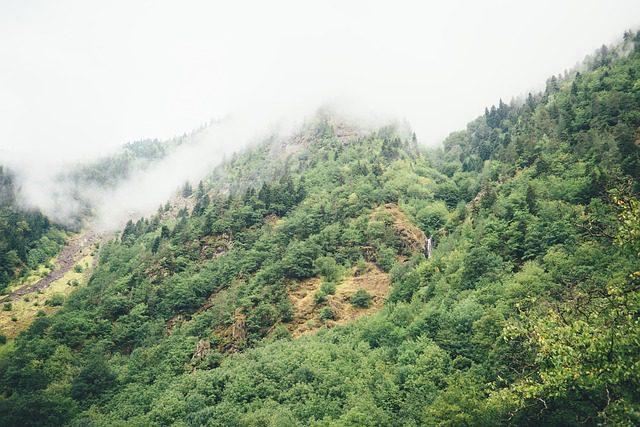 hillside-983954_640