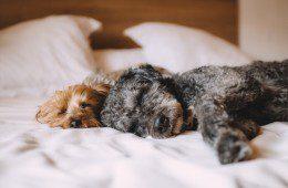 7 põhjust, miks eelistada üüripindu hotellile