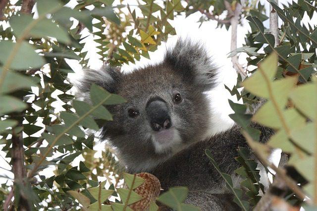 australia-1343299_640