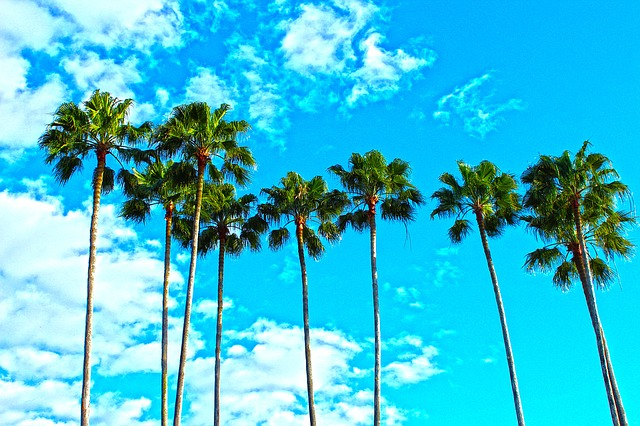 palm-trees-1277243_640